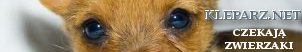 Nipplex  Bielizna Figi - Dbaj o zdrowy uśmiech Koty, koteczki, adopcje kotów, karam dla kotów, dla kotów, Kuchnia, przepisy, gastronomia ,loklae, warszawa, KRaków , Tłumacz niemieckiego , szkoła jezyków obcych Kraków e-learing, tłumaczenia niemiecki Kazania i homilie